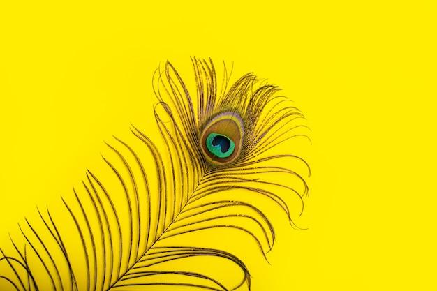 Lindo elegante iridescente azul ouro verde com olho mágico de pena de pavão exótico em fundo amarelo.