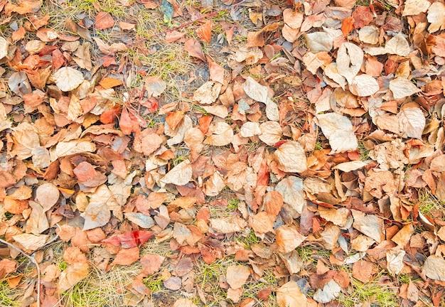 Lindo fundo de outono com folhas caídas de amarelo e dourado, banner