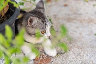 Lindo gatinho bonitinho com lindos olhos amarelos na areia branca no jardim ao ar livre