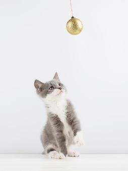 Lindo gatinho cinzento brincando com um brinquedo de natal.