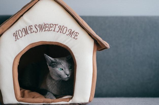 Lindo gatinho dormindo na casa de gato.