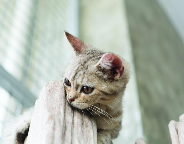 Lindo gatinho fofo em fundo branco