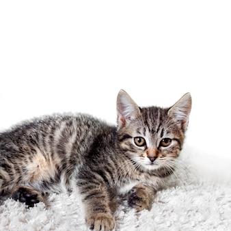 Lindo gatinho malhado deitado no tapete macio branco