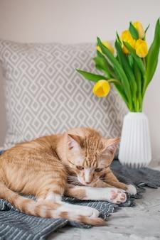 Lindo gatinho ruivo deitado no cobertor cinza em casa