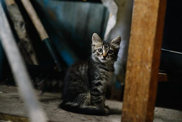 Lindo gatinho sem-teto fofo em uma casa abandonada está olhando atentamente para a câmera. o conceito de solidão.