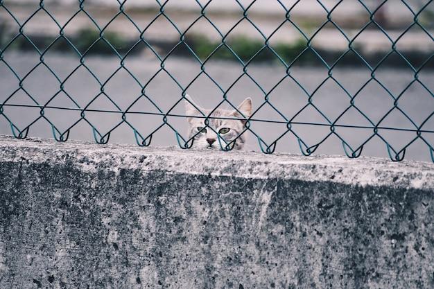 Lindo gato, abandonado atrás de uma cerca na rua