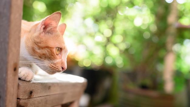 Lindo gato branco e marrom com bokeh de luz do sol e fundo de reflexo de lente. animal de estimação fofo relaxar no jardim doméstico.