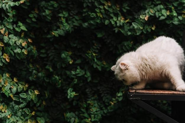 Lindo gato branco na natureza