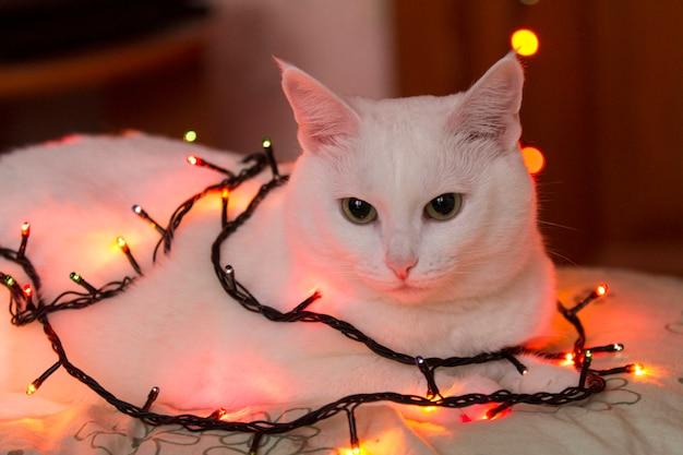 Lindo gato branco senta-se embrulhado em festão. guirlandas luminosas no pescoço do gato. gato em luzes do feriado