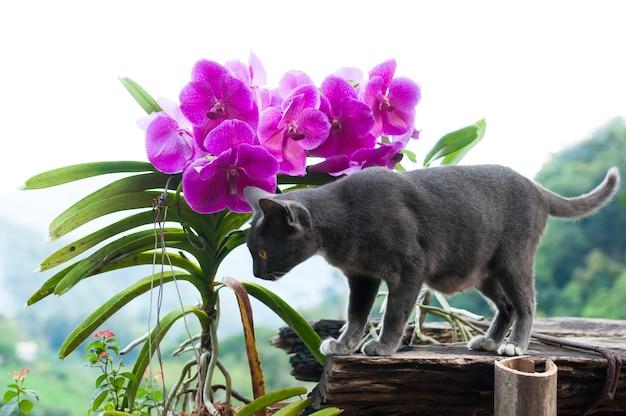 Lindo gato cinza e orquídeas roxas