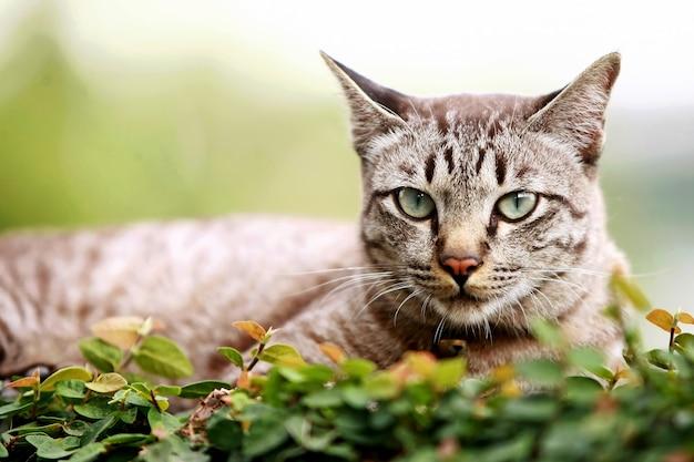 Lindo gato cinza sentado ao ar livre
