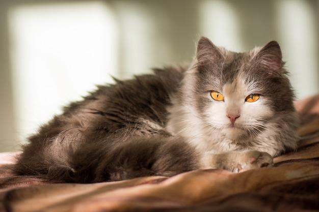 Lindo gato cinzento branco