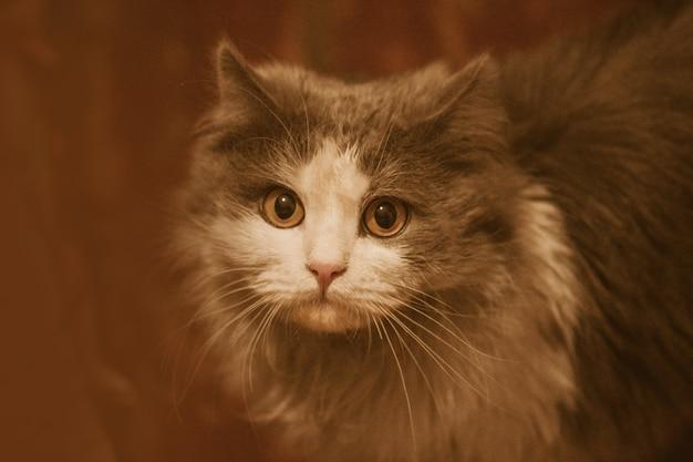 Lindo gato cinzento e branco.