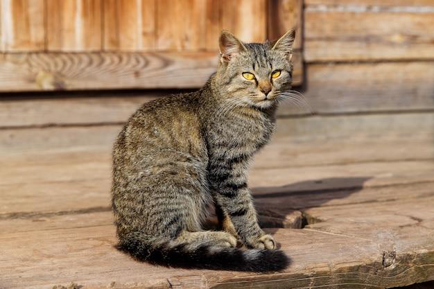 Lindo gato cinzento sentado em uma varanda de madeira.