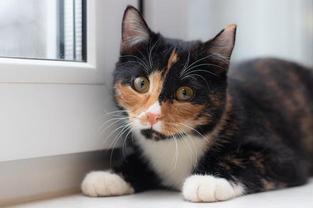 Lindo gato colorido sentado no parapeito de uma janela e olhando para a janela.