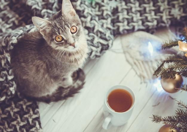 Lindo gato com uma xícara de chá perto de árvore de natal