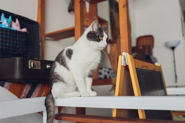 Lindo gato de estimação sentado na mesa em casa olhando para a câmera relaxando animal doméstico peludo peludo fofo com olhos verdes adorável gatinho peludo amigo felino dentro de casa