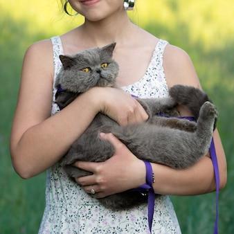 Lindo gato de pêlo curto britânico com uma coleira nos braços de uma adolescente caucasiana ao ar livre no campo em uma ensolarada noite de verão
