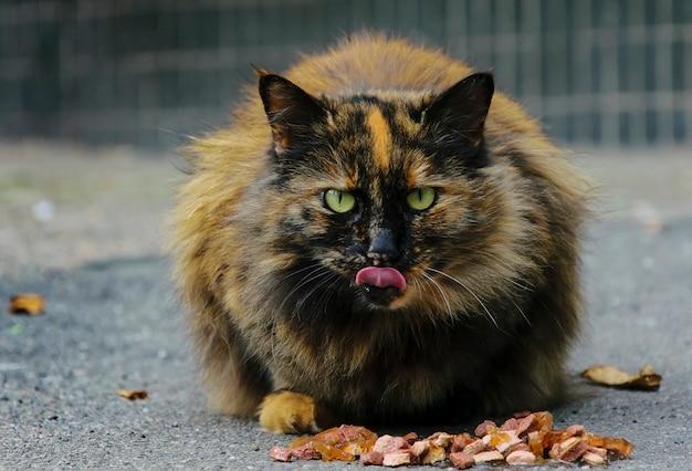 Lindo gato de rua comendo comida
