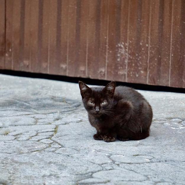 Lindo gato de rua preto na rua