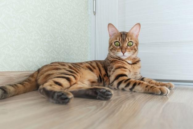Lindo gato doméstico descansando em uma sala iluminada