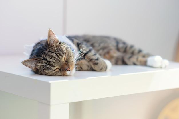 Lindo gato doméstico listrado dormindo