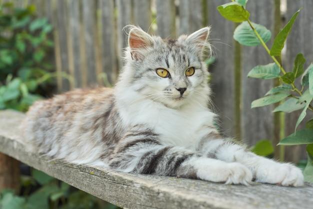 Lindo gato fofo cinzento deitado no banco ao ar livre