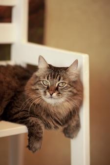 Lindo gato listrado marrom macio, sentado na cadeira.