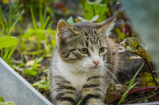 Lindo gato malhado descansando no jardim