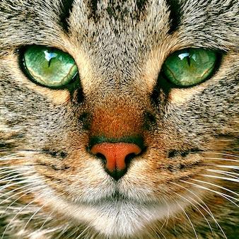 Lindo gato malhado potrait com olhos verdes