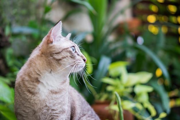 Lindo gato no jardim.