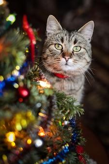 Lindo gato perto da árvore de christman