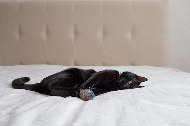 Lindo gato preto deitado em um sofá bege
