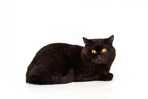 Lindo gato preto sobre um fundo branco