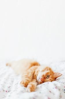 Lindo gato ruivo deitada na cama. animal de estimação fofo confortavelmente acomodado para dormir. fundo home acolhedor com animal de estimação engraçado. coloque para o texto.