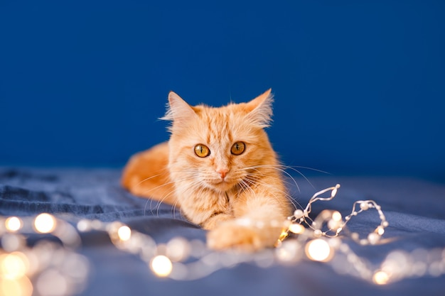 Lindo gato ruivo deitado na cama. animal de estimação fofo acomodado confortavelmente para dormir. aconchegante casa fundo com animal de estimação engraçado.
