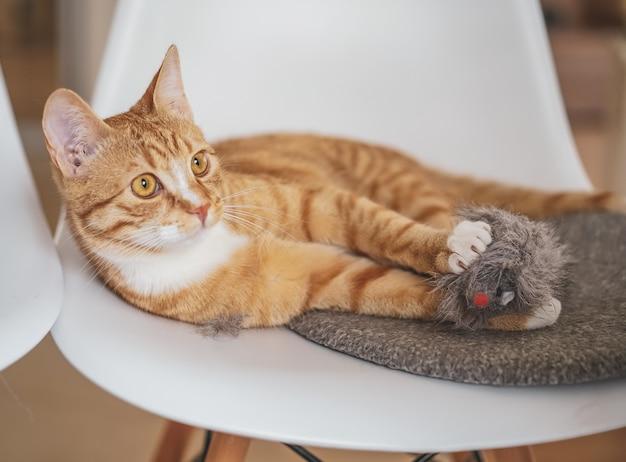 Lindo gato ruivo deitado no cobertor cinza em casa, relaxar o tempo