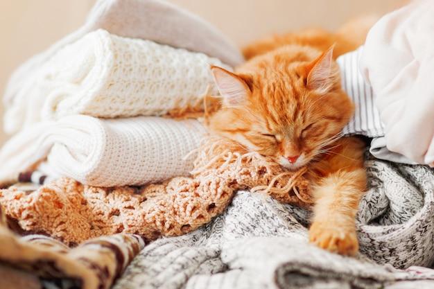 Lindo gato ruivo dorme sobre uma pilha de roupas de malha.