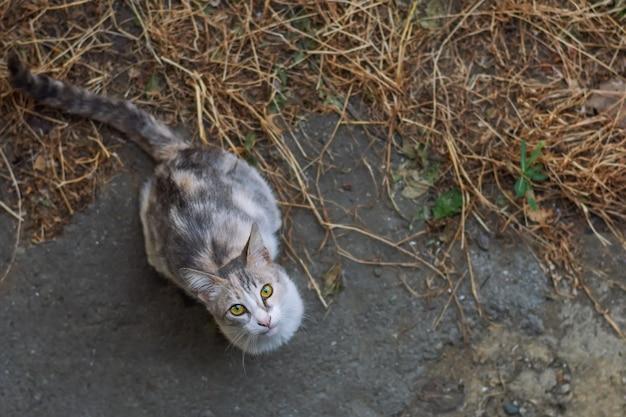 Lindo gato sem teto pedindo comida
