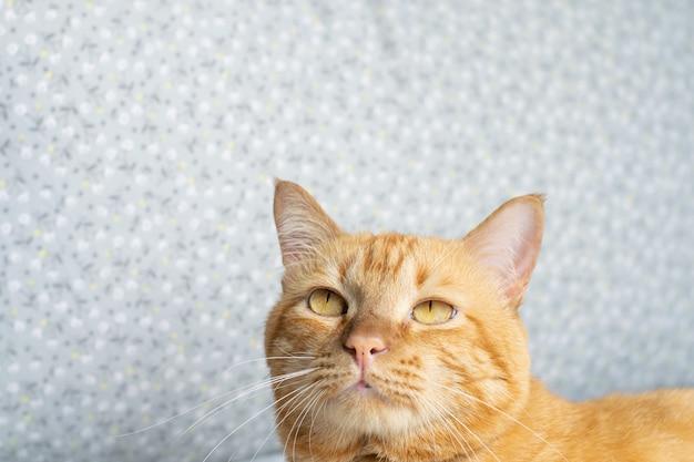 Lindo gato sob muitos sentir