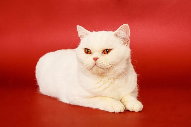 Lindo gato sobre um fundo vermelho.