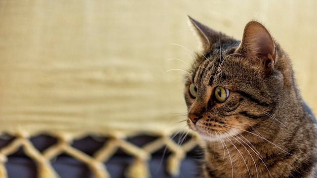 Lindo gato surpreso dentro de casa