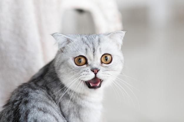 Lindo gato tigrado cinzento com olhos amarelos fica no chão branco