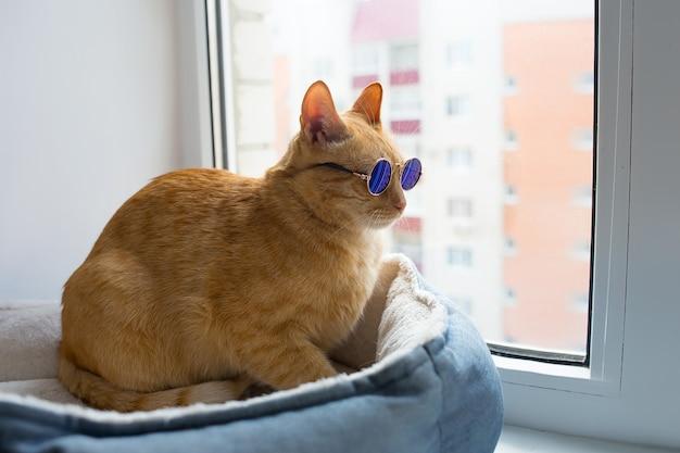 Lindo gato vermelho com óculos na janela