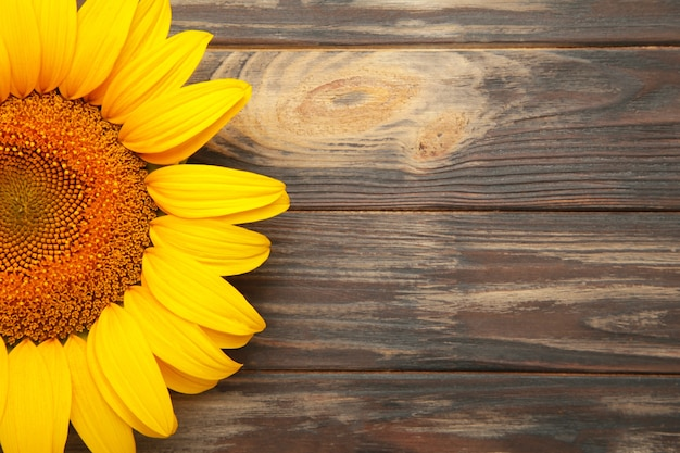 Lindo girassol fresco em fundo marrom. camada plana, vista superior, espaço de cópia. outono ou verão conceito, época de colheita, agricultura. fundo natural de girassol.