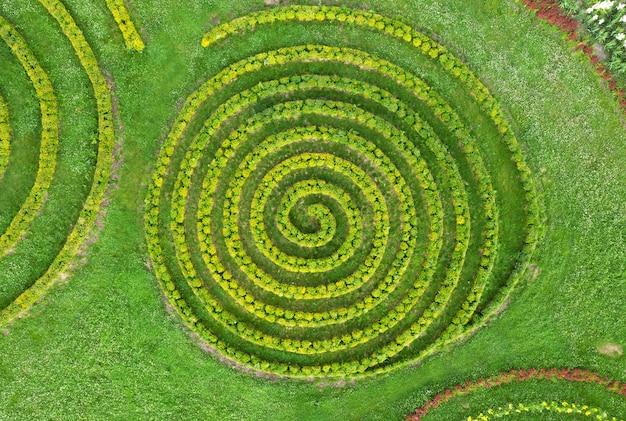Lindo jardim de verão com gramado verde e arbustos em forma de espiral.