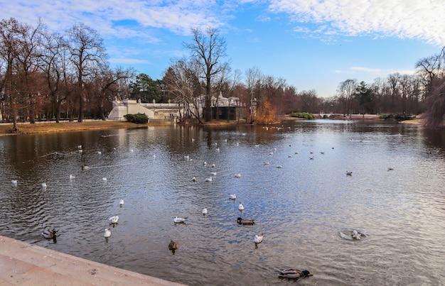 Lindo lago com pássaros no parque de banhos reais na primavera em varsóvia, na polônia