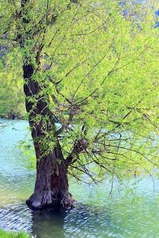 Lindo lago e árvore de nascente na água