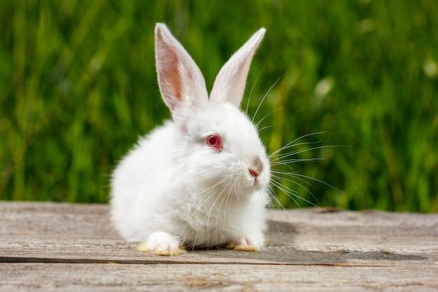Lindo lindo coelho branco sobre fundo verde natural