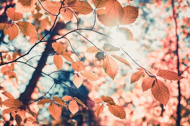 Lindo outono dourado na árvore da floresta com folhas douradas contra o fundo natural do céu azul